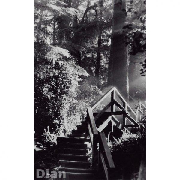 Dian McCreary Fine Art Photography - Into the Light