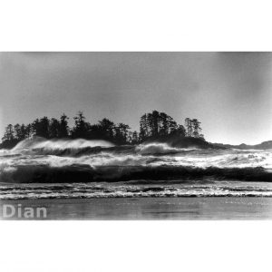 Dian McCreary Fine Art Photography - Winter at Chestermans
