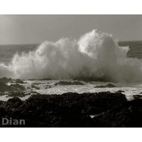 Dian McCreary Fine Art Photography - Wild Pacific Trail 9
