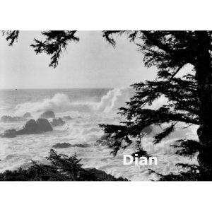 Dian McCreary Fine Art Photography Wild Pacific Trail 3