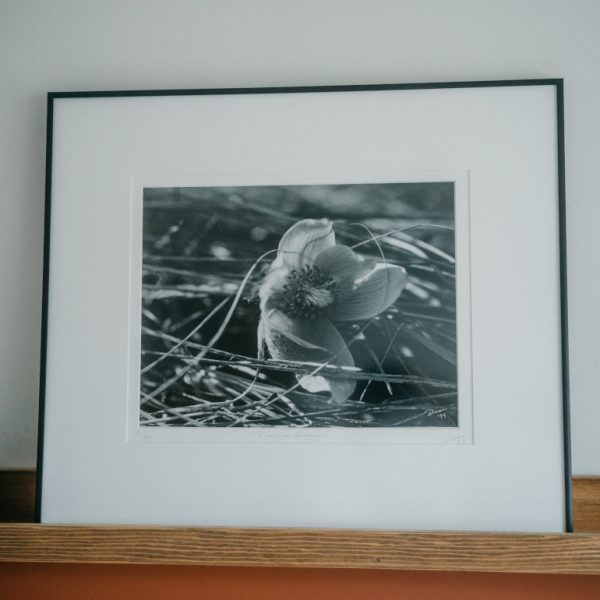 Dian McCreary Fine Art Photography Example Images in Rag Mat and Framed